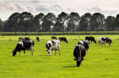5 motivos para consumir carne orgânica